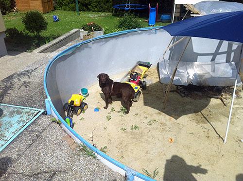 Tierrettung - Hund in Schwimmbecken