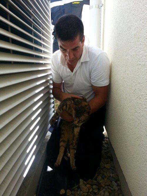 Tierrettung - Katze in Wärmepumpenschacht