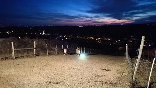 Tierrettung - Pferd hängt in Zaun